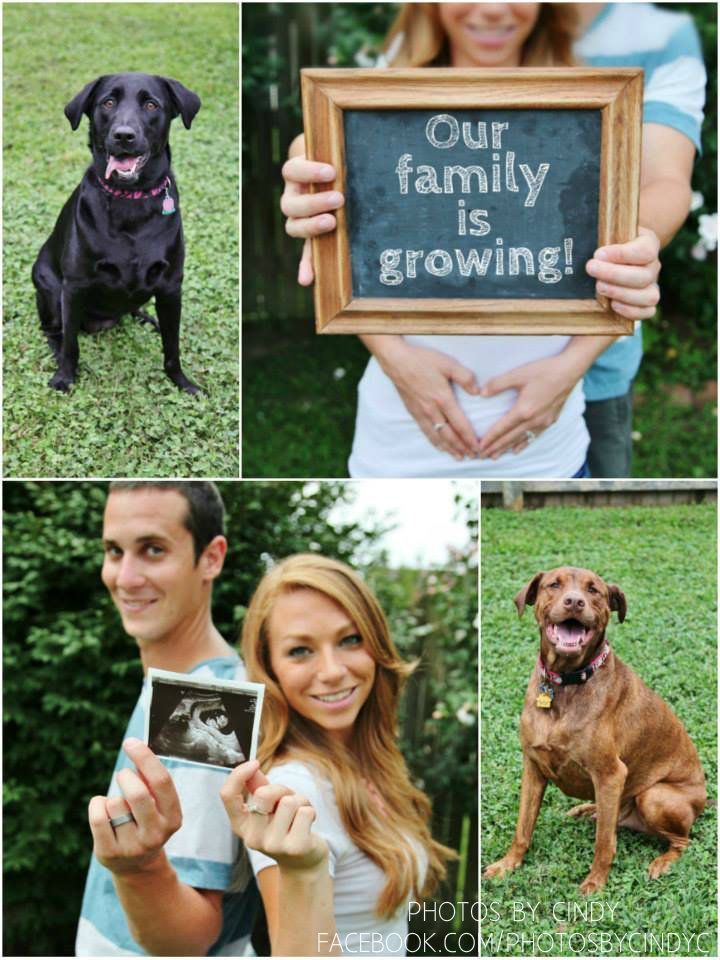 Our family is growing. Baby announcement. Family dogs. Photography prop. maternity. love.  PHOTOS BY CINDY