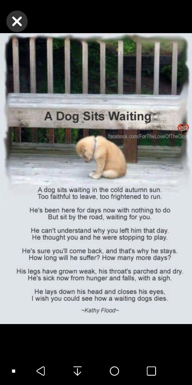 Pin By Nadia Bernard On Goodbye My Friend Dog Sitting Dog Waiting Dogs
