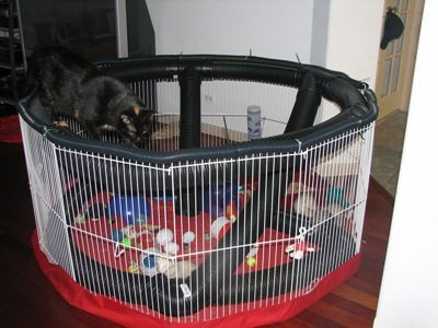 diy toys for ferrets - Google Search                              …