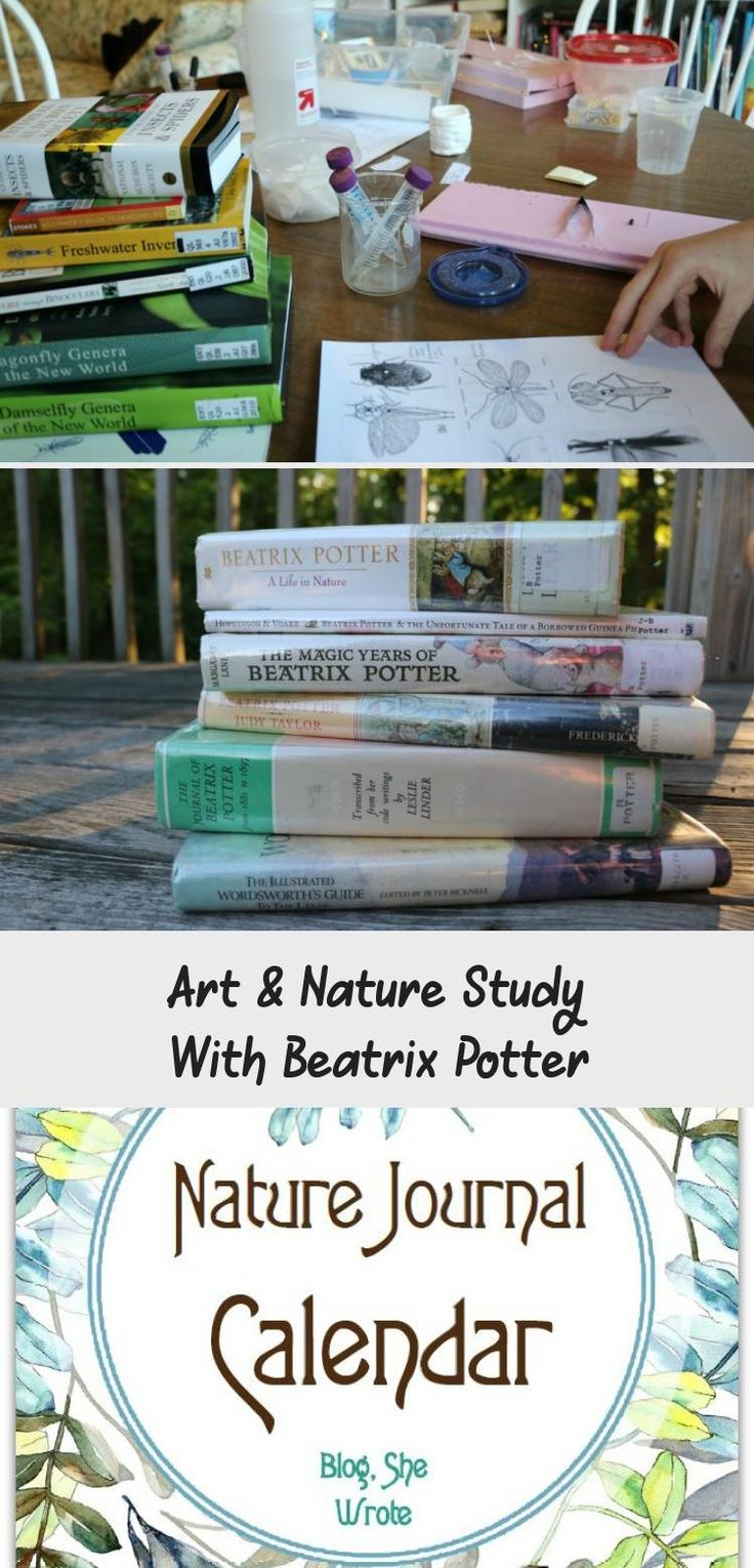 Art nature study with beatrix potter art in 2020
