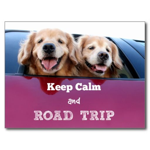 Golden Retriever Keep Calm and Road Trip Postcard by #AugieDoggyStore.