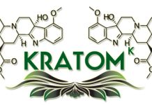 kratom box provides reviews for the best place selection to buy kratom, its leaf , powder & capsules. You can easily