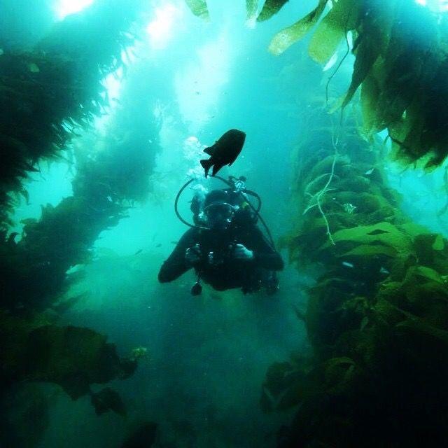 #diving #catalina