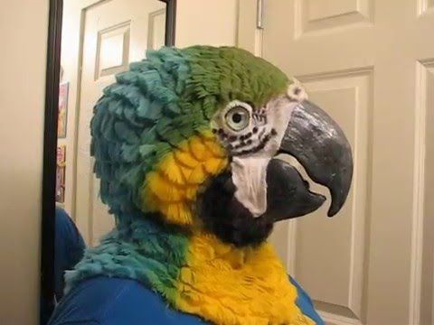 A Woman Moves Like a Parrot While Wearing an Incredibly Realistic Costume of Her Own Design