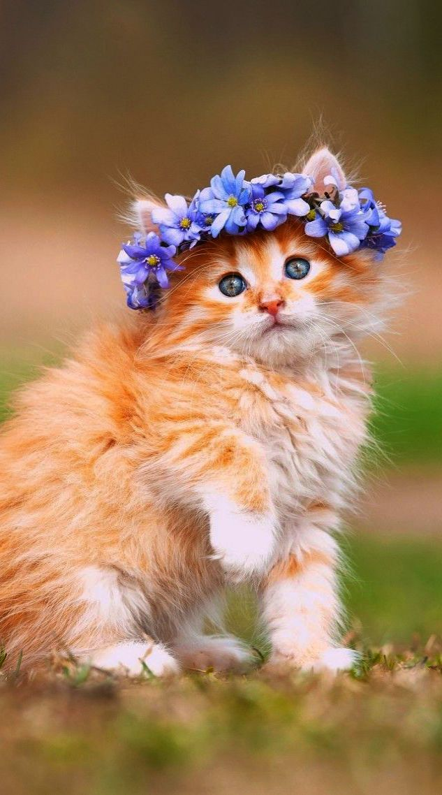 Cute Animals To Draw Easy Cute Cat Names Beginning With C Cute Cats Cute Baby Cats Kittens Cutest