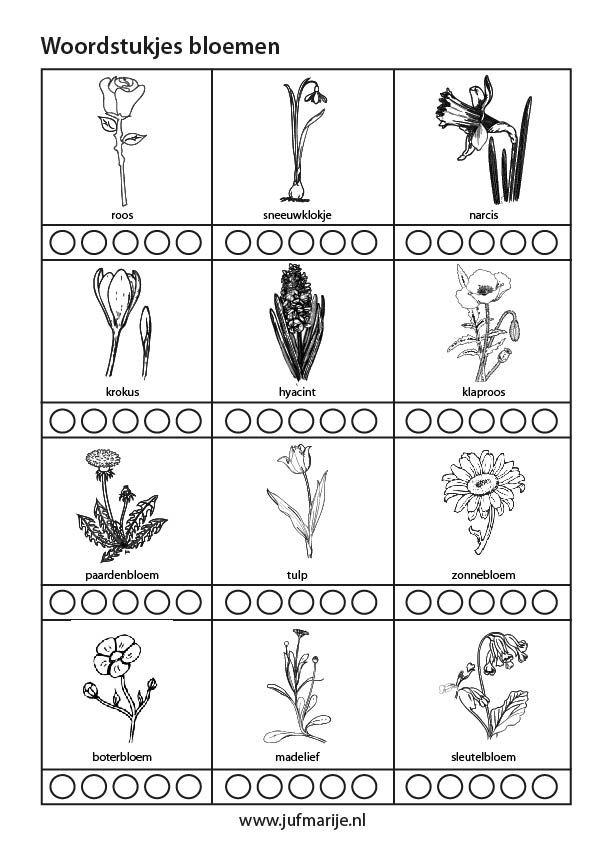 werkblad woordstukjes bloemen