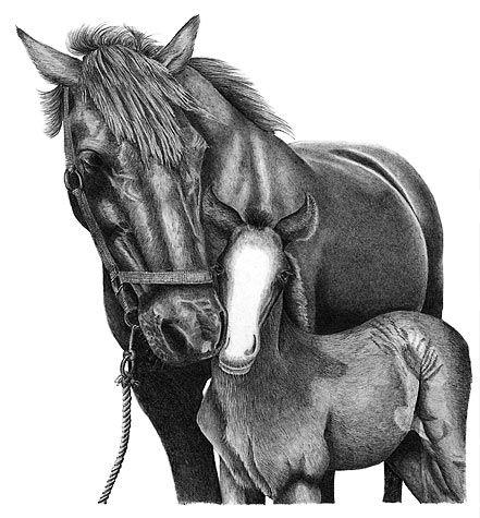 Horse Drawings   pencil drawings of horses
