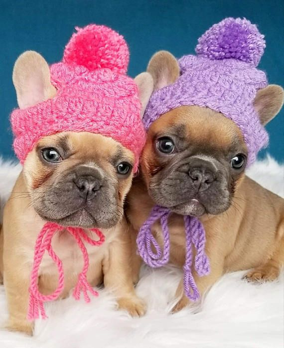 Small Puppy Dog Holiday Knit Crochet Hats Beanie Toque Pompom
