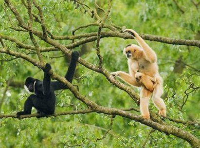 Wild Gibbon Trek, Cat Tien National Park, Vietnam.