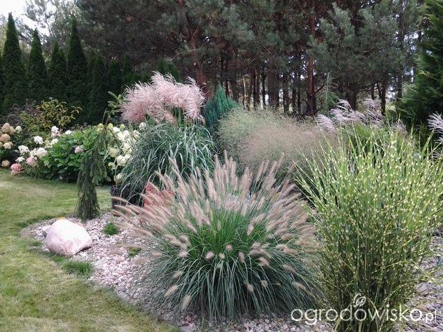 Forum ogrodnicze – Ogrodowisko Gartenforum – Garten