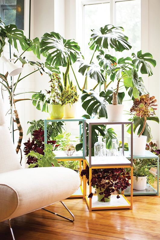 stacked house plants