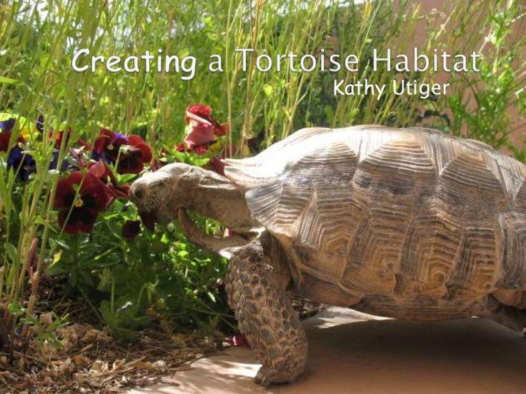 Creating a tortoise habitat