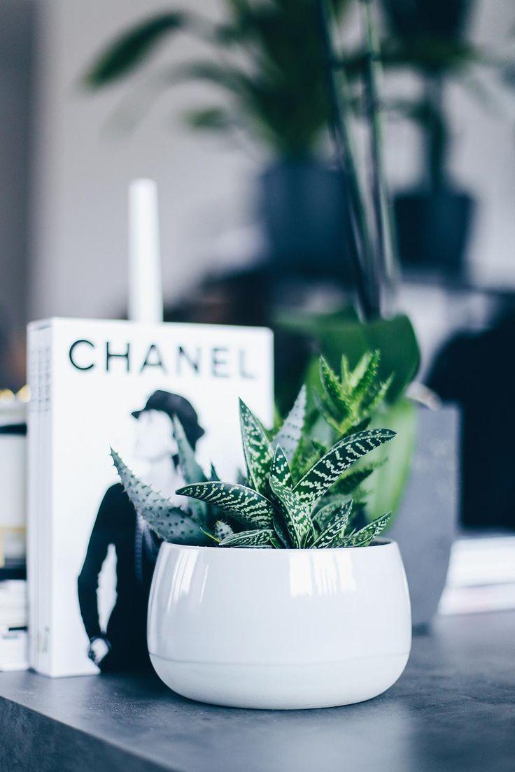 The 25+ Best Ideas About Große Zimmerpflanzen On Pinterest ... Pflege Von Pflanzen Probleme Grunde