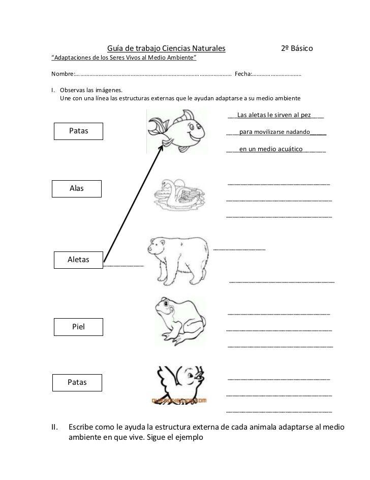 Guía De Trabajo Ciencias Naturales 2º Básico Br Ciencias Naturales Prueba De Ciencias Naturales Ciencia