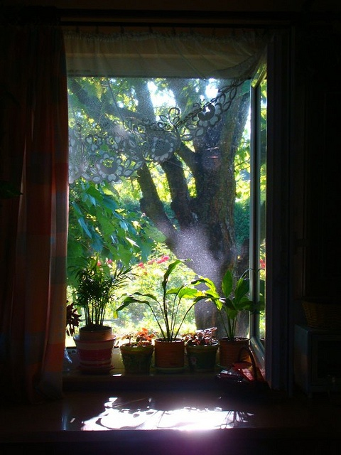 Your assumptions are your windows on the world. Scrub them off every once in a while, or the light won't come in.