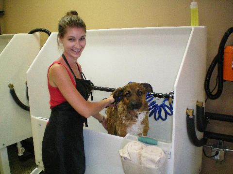 12 best dog wash images on pinterest dog daycare dog grooming here are some tips on how to start a self serve dog washing business solutioingenieria Images