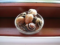 Garden Snail Shells for craft projects