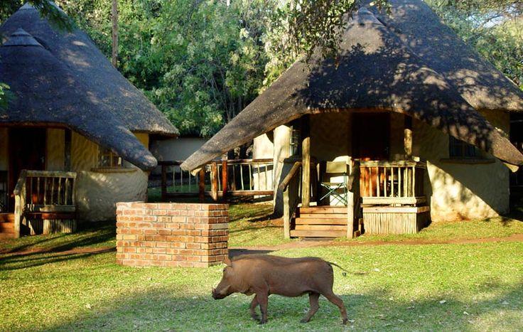 Chobe Safari Lodge | Simply Botswana Safaris