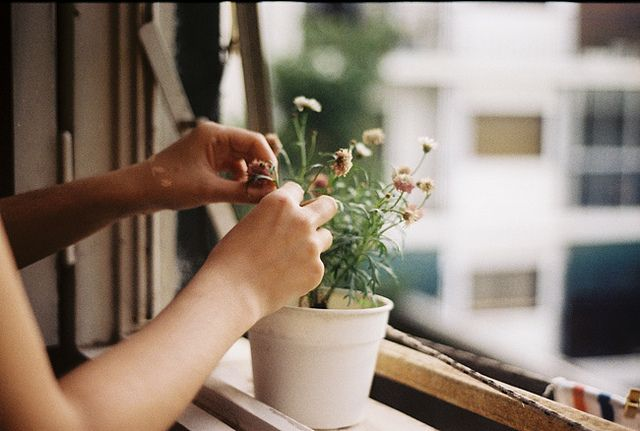 grow a potted plant on my window sill