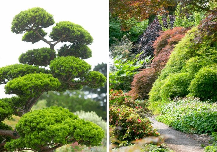 Japanese Garden: For more information visit online garden centre Bakker.com