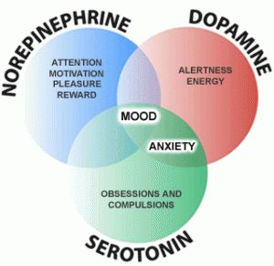 3 Main Neurotransmitters