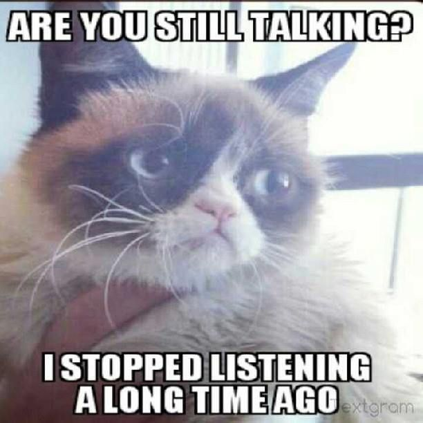 Funny Cat Sayings Quotes: 442 Best GRUMPY CAT Images On Pinterest