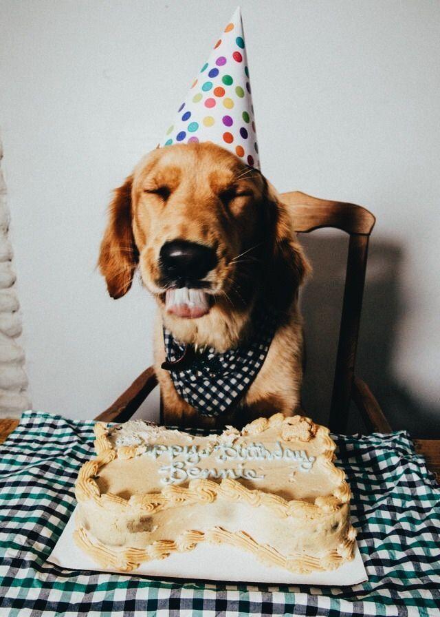 Днем, открытка с днем рождения животные
