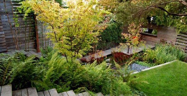 petit jardin aménagement avec fougères