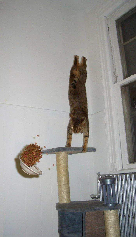 8 best Katzentür (Zugang über Lichtschacht) images on Pinterest ...