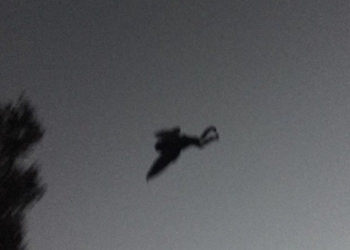 New Mothman sighting and photos from Point Pleasant WV