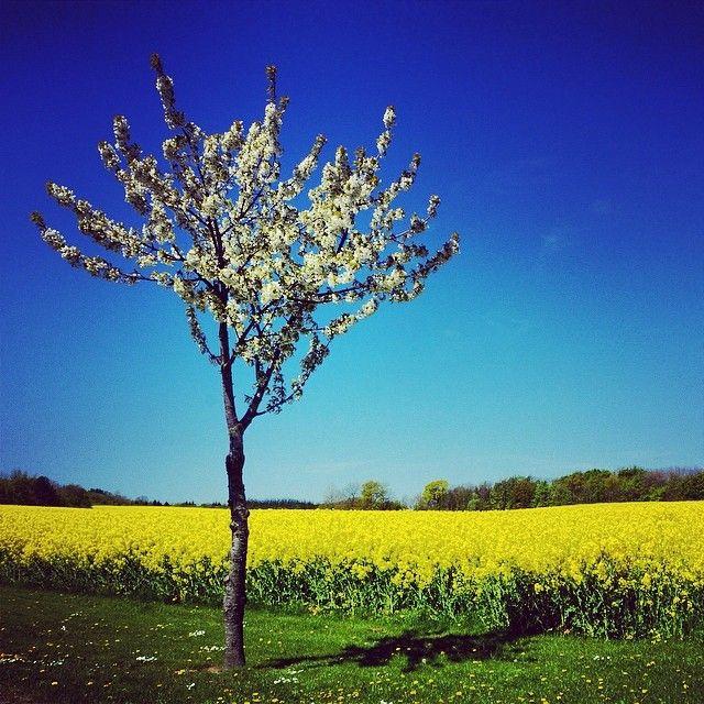 Frühling auf Bornholm