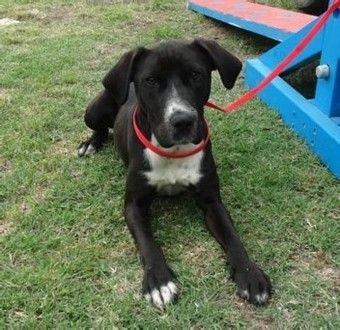 Angus a young 1yo located in Vic and looking for a new home.   Check out http://www.petrescue.com.au/listings/344706 for more infomation about him.