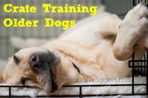 A practical guide to crate training an older dog.  Straightforward advice, handy tips, daily schedule and more.  Success starts here.