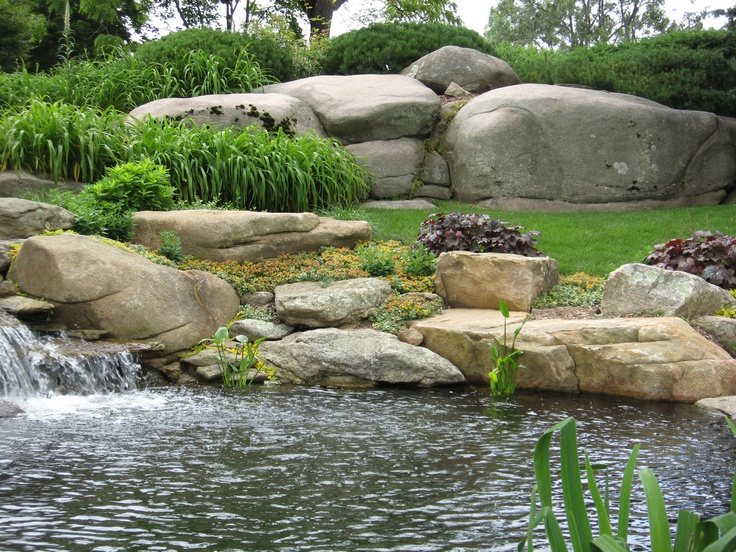 the pond edge boulders and water garden plants in connecticut by matthew giampietro