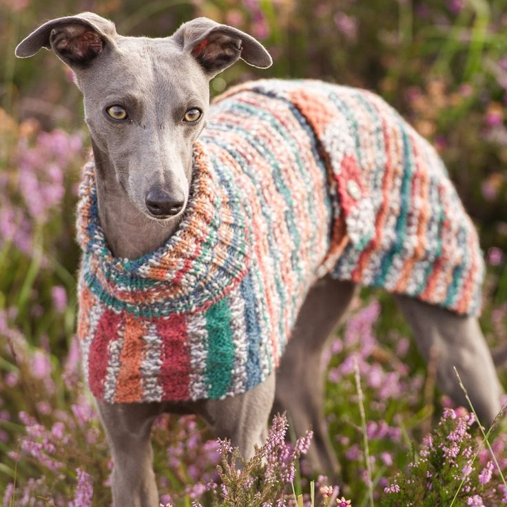 Knitting Pattern For Whippet Coat : 17 Best images about Pets on Pinterest Coats, Whippet puppies and Puppys