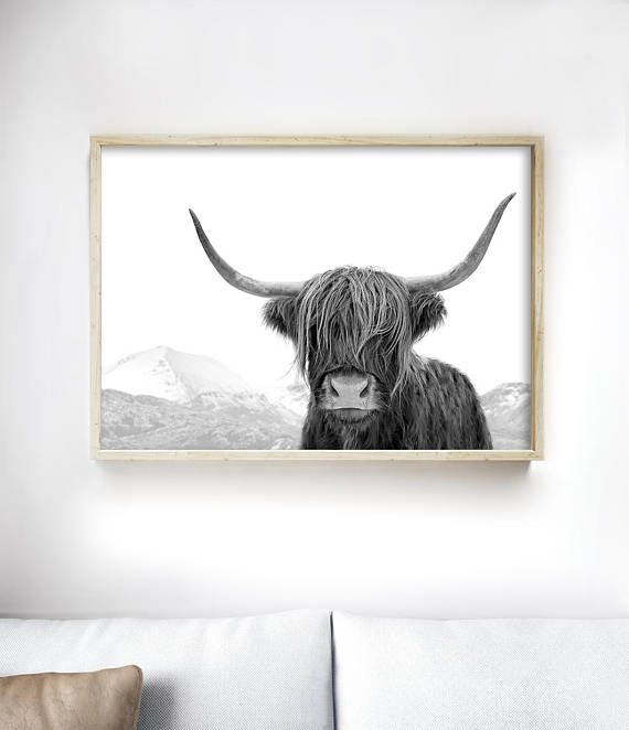 Highland Cow Art Print | Black and White Photography Print by Little Ink Empire on Etsy