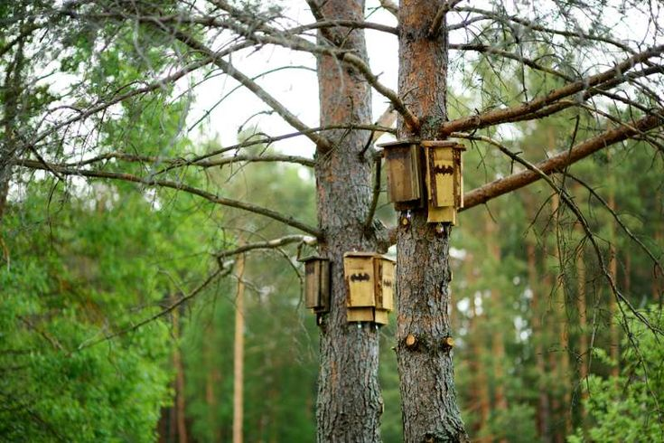 Bat house ideas worth hanging around for in 2020 bat