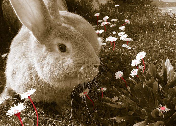 WallArt - Rabbit - Presentorium