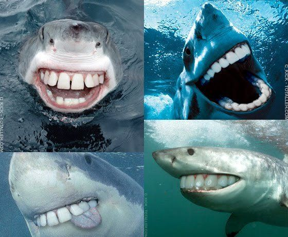 Sharks With People Teeth. I seriously cannot stop laughing right now this is so amazing!