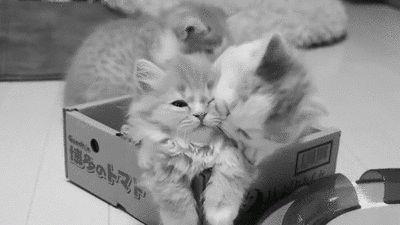 Tag a Cat, le premier site de rencontres à la Tinder exclusivement réservé... aux chats !