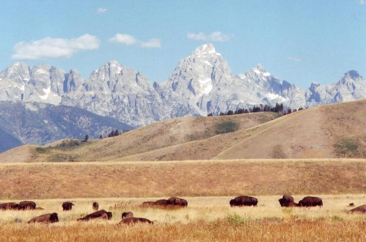 Grand Tetons & Buffalo