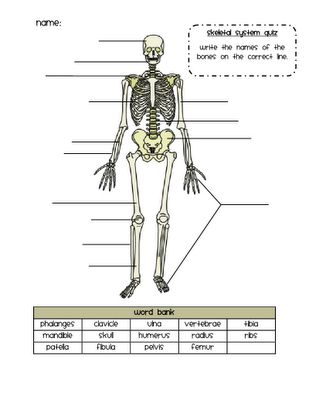 skeletal system quiz 7th grade life science pinterest activities bone jewelry and human. Black Bedroom Furniture Sets. Home Design Ideas