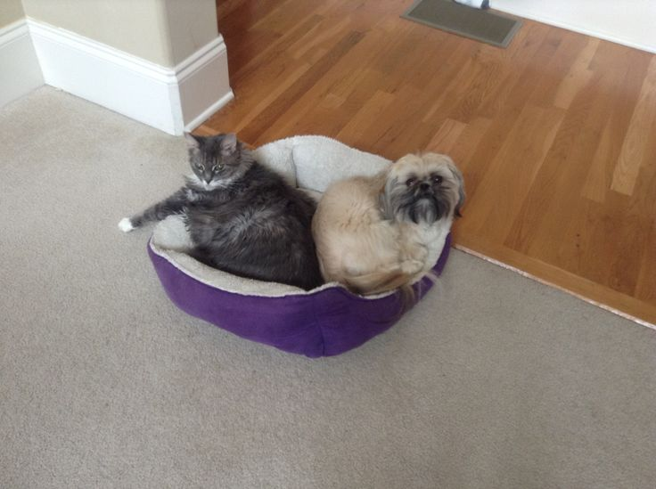 Whose bed is this?