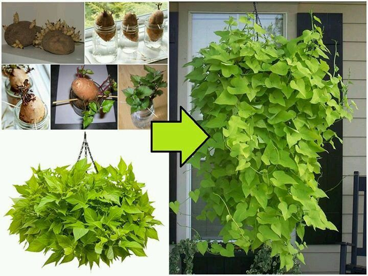 how to make a new plant from an existing one