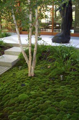 Maak in een kleine tuin eens gebruik van mos in plaats van gras. Vaak is een kleine tuin schaduwrijk. Gras heeft het daarom altijd moeilijk in een kleine tuin. Mos is altijd groen en ook erg mooi.