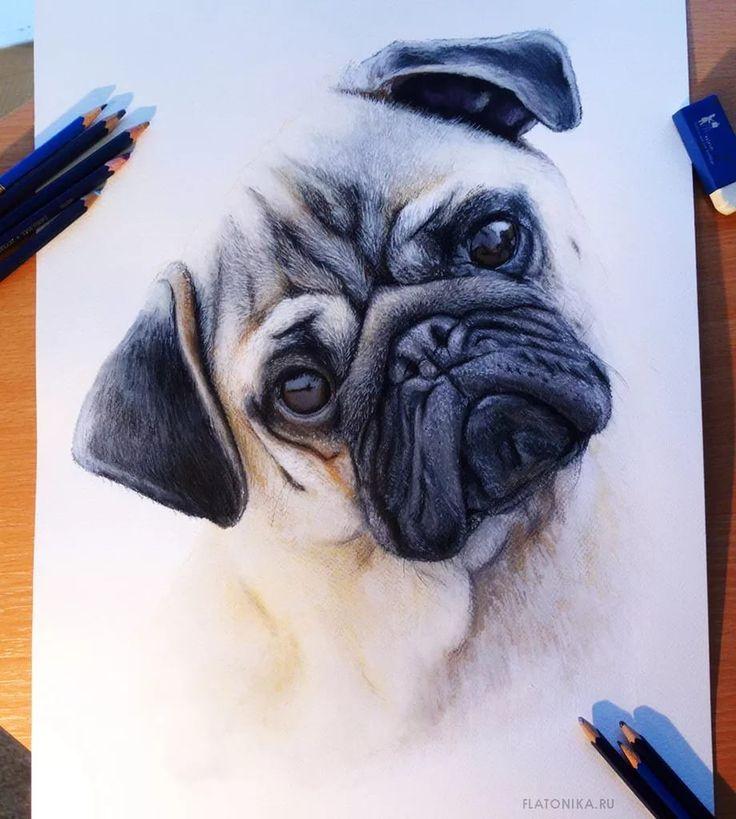 реалистичные рисунки животных: 17 тыс изображений найдено в Яндекс.Картинках