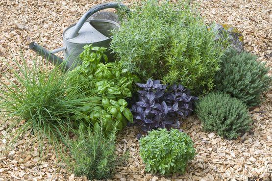 Kräutergarten ohne Arbeit, Schmutz und Unkraut