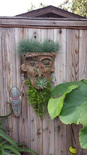 Succulent garden made from clay mask
