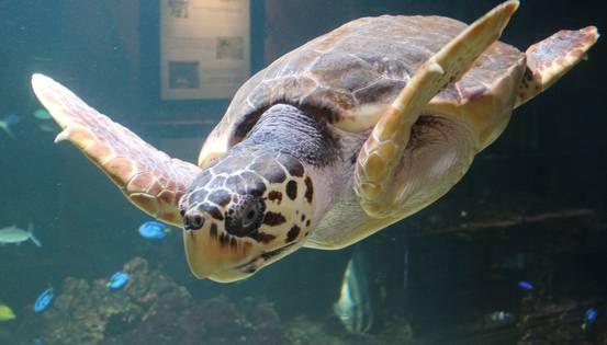 Aquarium Büsumer Meereswelten -der perfekte Ausflug ans Meer und sogar ins Meer, auch bei Regenwetter.