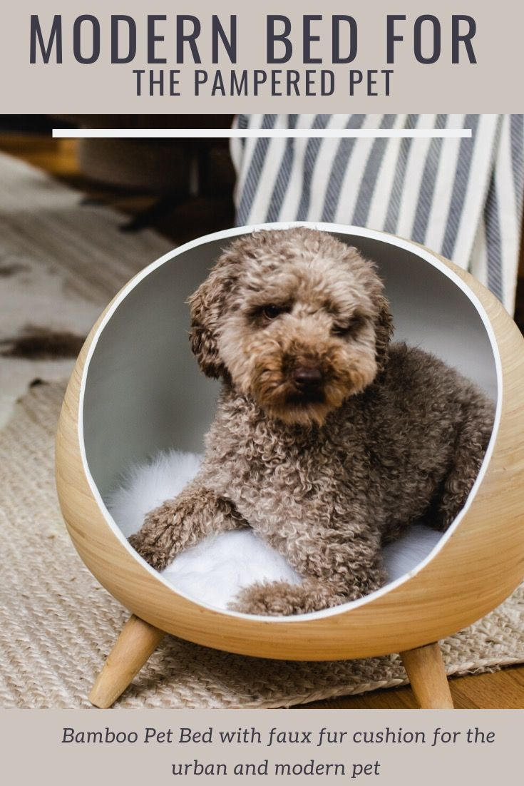 Modern Pet Bed For Small Cat Or Dog In 2020 Cute Animal Memes Cute Dog Toys Cute Little Puppies